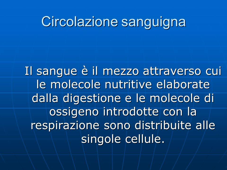 Circolazione sanguigna Il sangue è il mezzo attraverso cui le molecole nutritive elaborate dalla digestione e le molecole di ossigeno introdotte con la respirazione sono distribuite alle singole cellule.