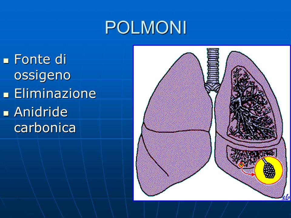 POLMONI Fonte di ossigeno Fonte di ossigeno Eliminazione Eliminazione Anidride carbonica Anidride carbonica