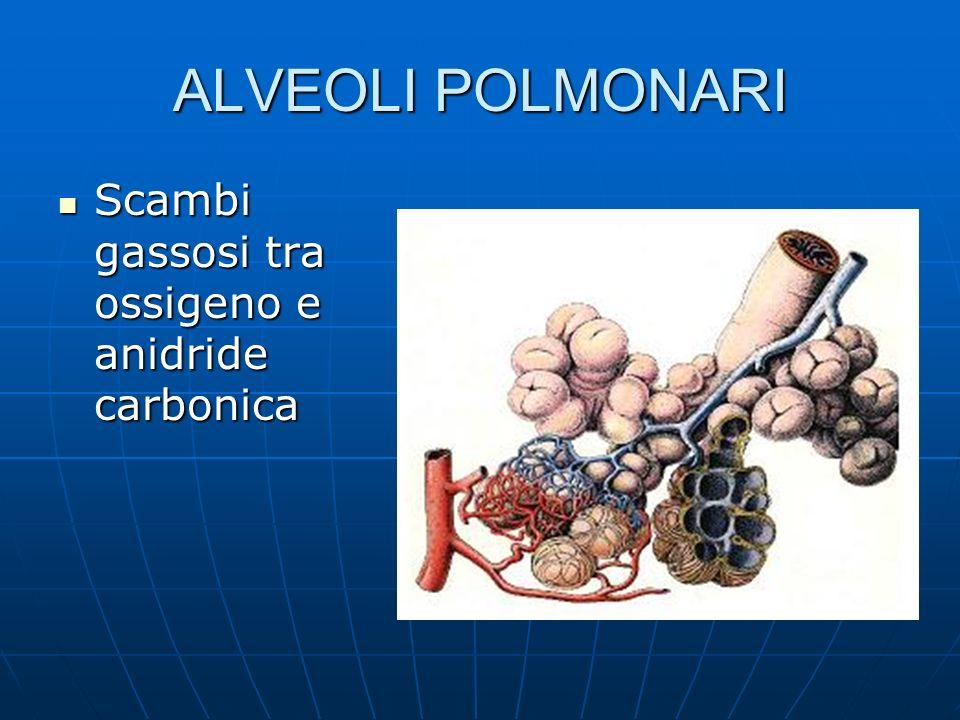 ALVEOLI POLMONARI Scambi gassosi tra ossigeno e anidride carbonica Scambi gassosi tra ossigeno e anidride carbonica
