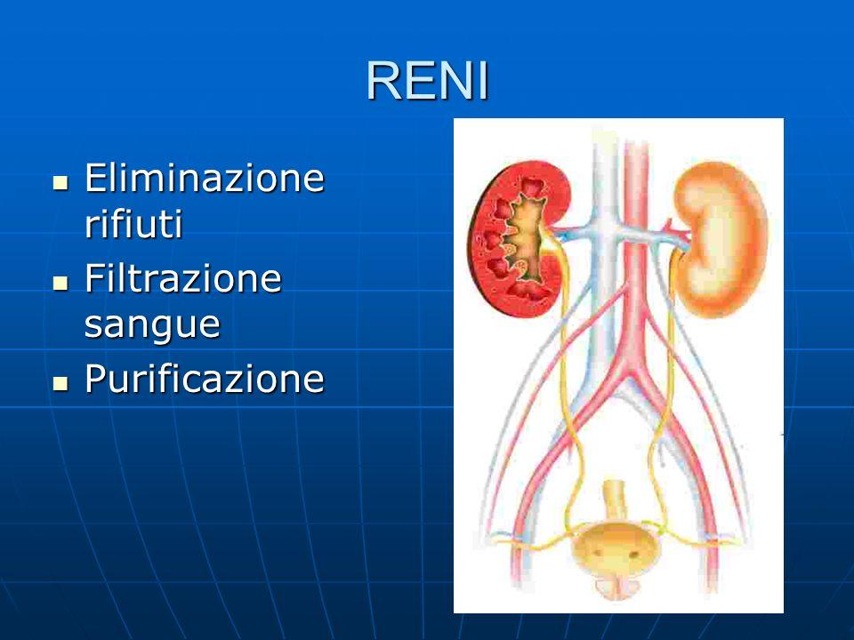RENI Eliminazione rifiuti Eliminazione rifiuti Filtrazione sangue Filtrazione sangue Purificazione Purificazione