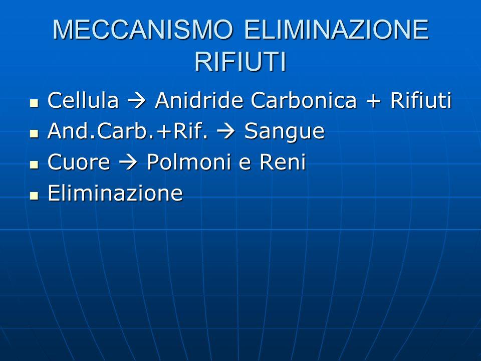 MECCANISMO ELIMINAZIONE RIFIUTI Cellula Anidride Carbonica + Rifiuti Cellula Anidride Carbonica + Rifiuti And.Carb.+Rif. Sangue And.Carb.+Rif. Sangue