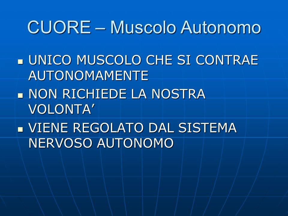 CUORE – Muscolo Autonomo UNICO MUSCOLO CHE SI CONTRAE AUTONOMAMENTE UNICO MUSCOLO CHE SI CONTRAE AUTONOMAMENTE NON RICHIEDE LA NOSTRA VOLONTA NON RICH