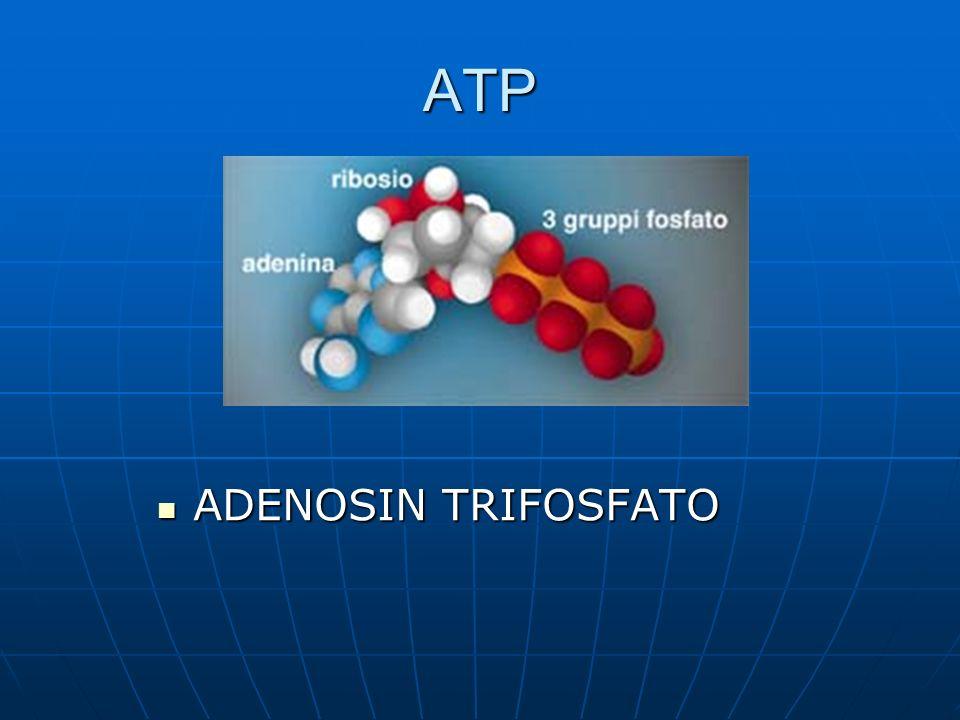 ATP ADENOSIN TRIFOSFATO ADENOSIN TRIFOSFATO