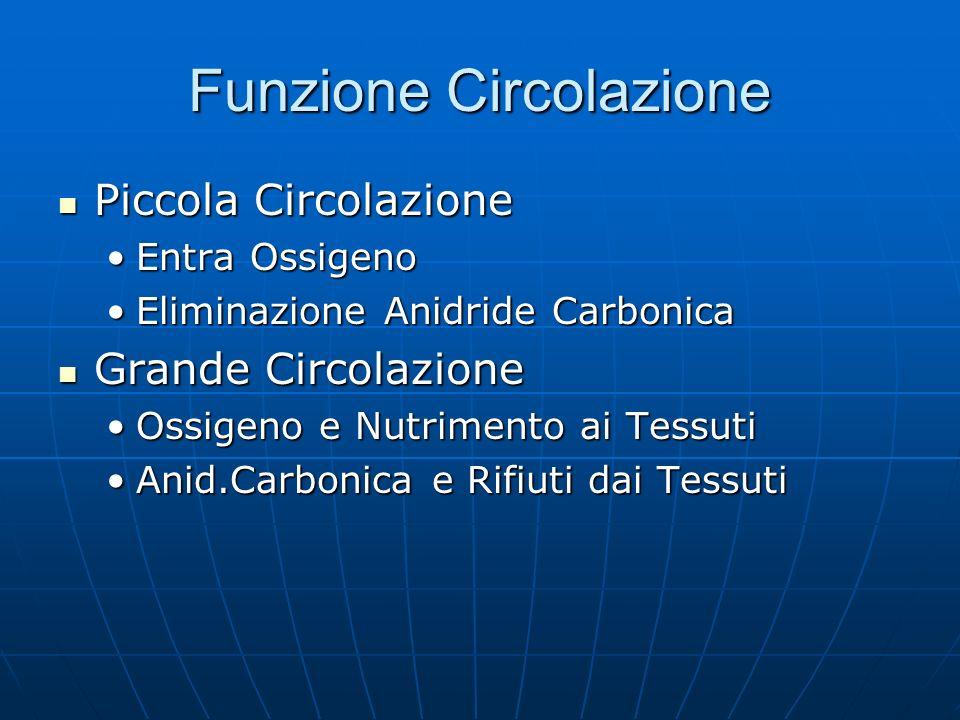 Funzione Circolazione Piccola Circolazione Piccola Circolazione Entra OssigenoEntra Ossigeno Eliminazione Anidride CarbonicaEliminazione Anidride Carb