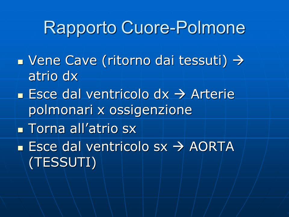 Rapporto Cuore-Polmone Vene Cave (ritorno dai tessuti) atrio dx Vene Cave (ritorno dai tessuti) atrio dx Esce dal ventricolo dx Arterie polmonari x ossigenzione Esce dal ventricolo dx Arterie polmonari x ossigenzione Torna allatrio sx Torna allatrio sx Esce dal ventricolo sx AORTA (TESSUTI) Esce dal ventricolo sx AORTA (TESSUTI)
