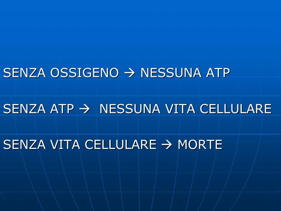 ORGANI NOBILI Organi fondamentali per la produzione di ATP (carburante) Organi fondamentali per la produzione di ATP (carburante)
