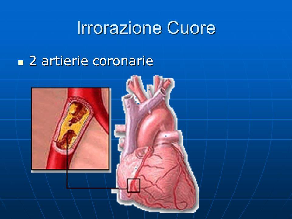 Irrorazione Cuore 2 artierie coronarie 2 artierie coronarie