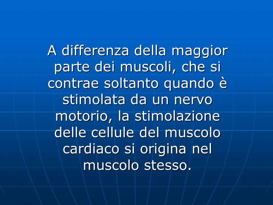 A differenza della maggior parte dei muscoli, che si contrae soltanto quando è stimolata da un nervo motorio, la stimolazione delle cellule del muscolo cardiaco si origina nel muscolo stesso.