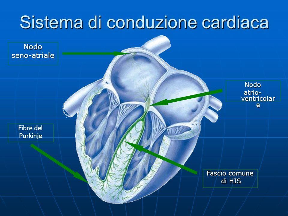Sistema di conduzione cardiaca Nodo atrio- ventricolar e Nodoseno-atriale Fascio comune di HIS di HIS Fibre del Purkinje