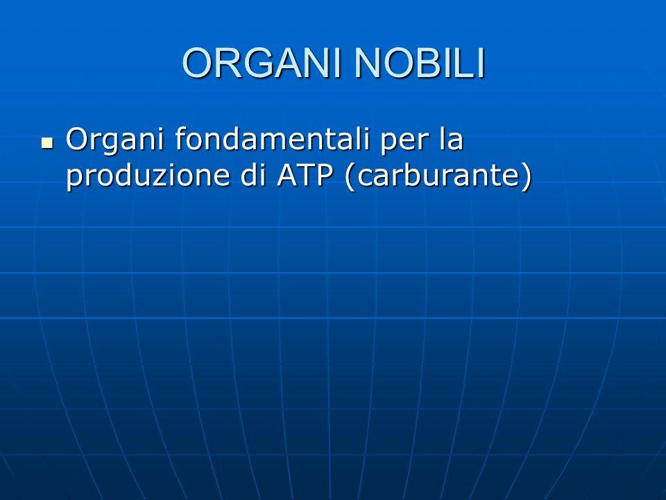 Sistema nervoso Maggiore consumatore di ATP Maggiore consumatore di ATP Sistema centrale vitale Sistema centrale vitale
