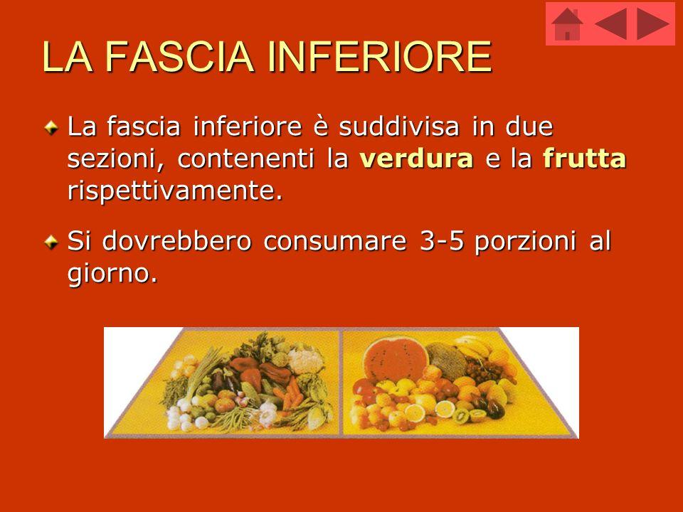 LA FASCIA INFERIORE La fascia inferiore è suddivisa in due sezioni, contenenti la verdura e la frutta rispettivamente. Si dovrebbero consumare 3-5 por