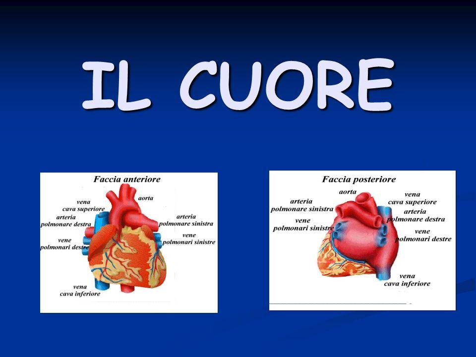 Il cuore è l organo centrale del sistema circolatorio: funge da pompa capace di produrre una pressione sufficiente a permettere la circolazione del sangue.