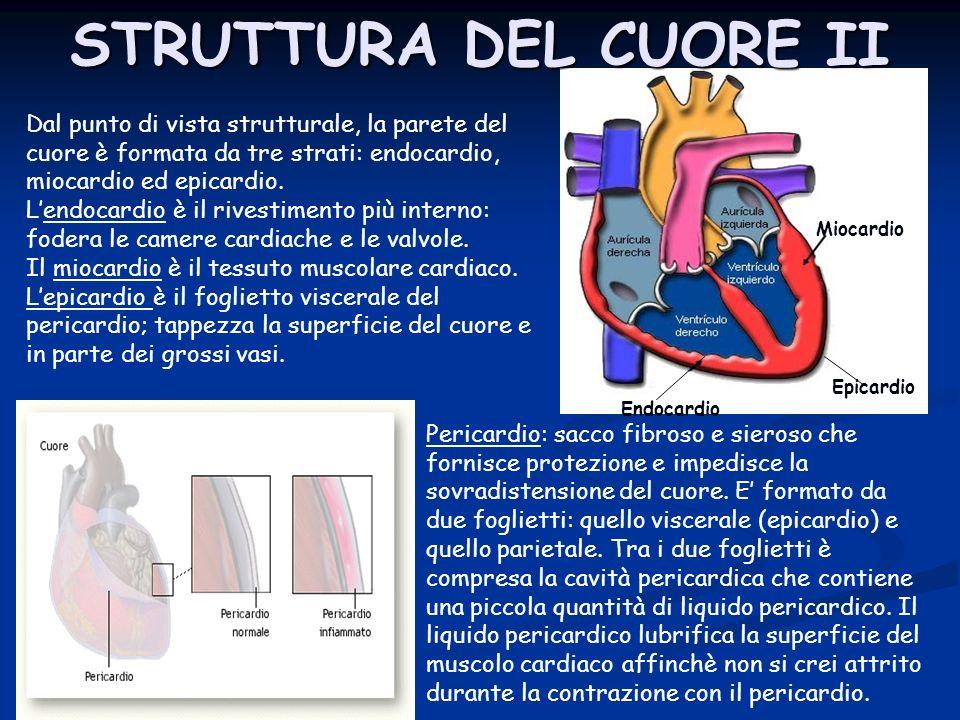 Dal punto di vista strutturale, la parete del cuore è formata da tre strati: endocardio, miocardio ed epicardio. Lendocardio è il rivestimento più int