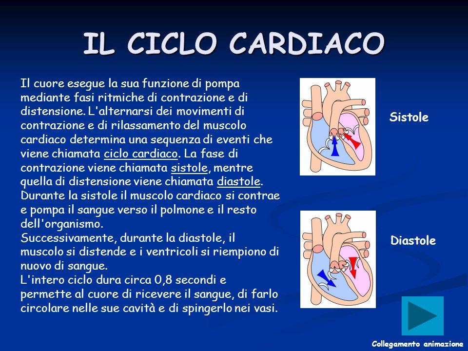 Il cuore esegue la sua funzione di pompa mediante fasi ritmiche di contrazione e di distensione. L'alternarsi dei movimenti di contrazione e di rilass