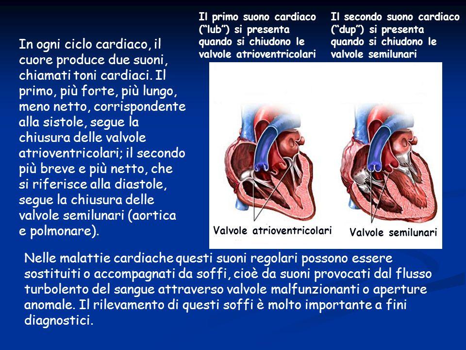 In ogni ciclo cardiaco, il cuore produce due suoni, chiamati toni cardiaci. Il primo, più forte, più lungo, meno netto, corrispondente alla sistole, s