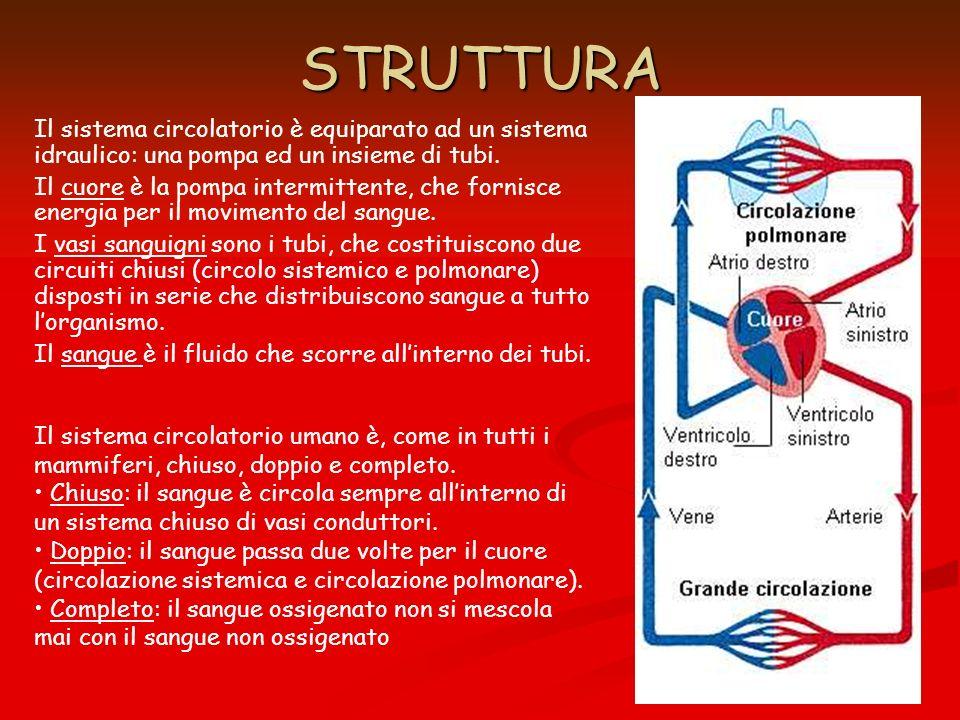 STRUTTURA Il sistema circolatorio è equiparato ad un sistema idraulico: una pompa ed un insieme di tubi. Il cuore è la pompa intermittente, che fornis