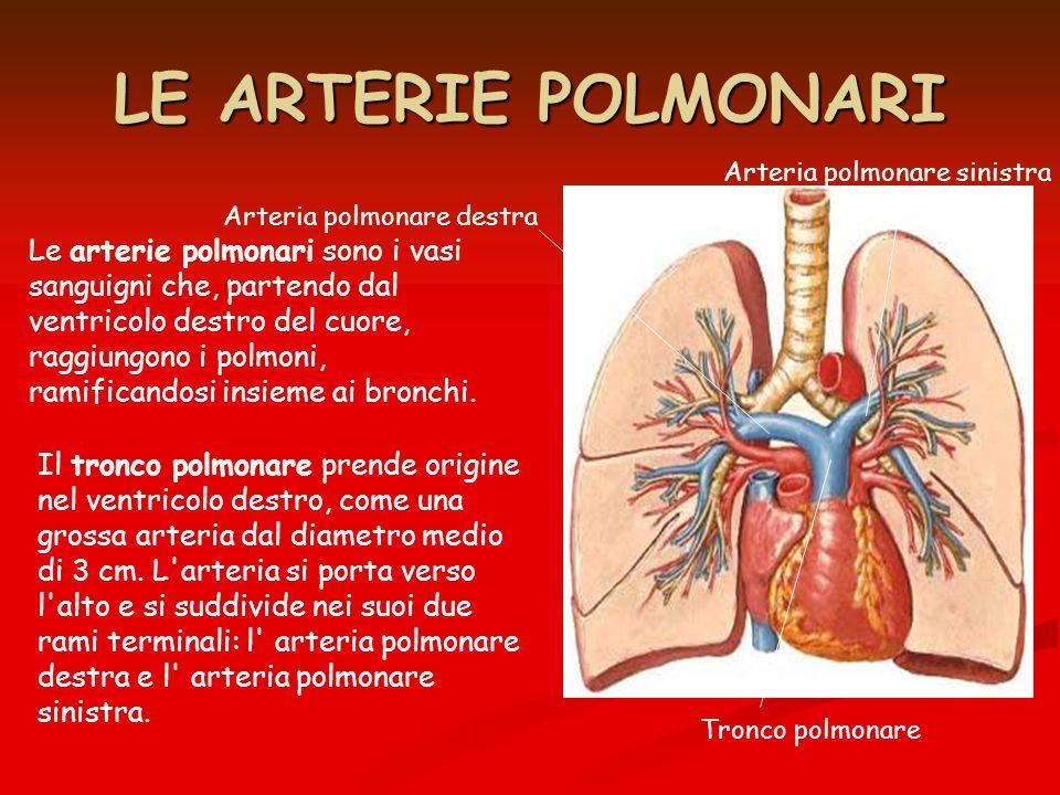 LE VENE POLMONARI Le vene polmonari sono i vasi sanguigni che, partendo dai polmoni, raggiungono il cuore, a livello dellatrio sinistro.