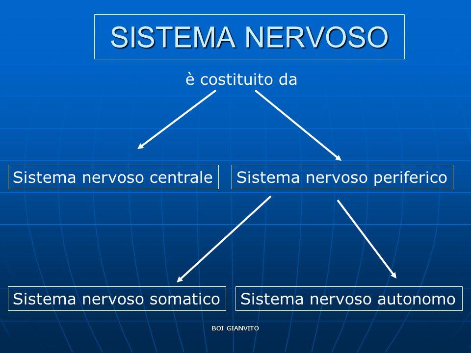 BOI GIANVITO SISTEMA NERVOSO è costituito da Sistema nervoso centraleSistema nervoso periferico Sistema nervoso somaticoSistema nervoso autonomo