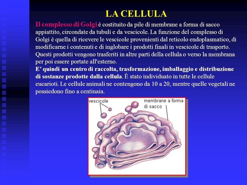 LA CELLULA Il complesso di Golgi è costituito da pile di membrane a forma di sacco appiattito, circondate da tubuli e da vescicole. La funzione del co