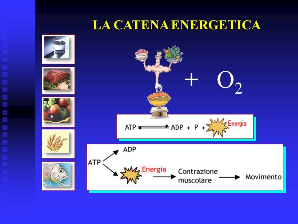 LA CATENA ENERGETICA +O2O2