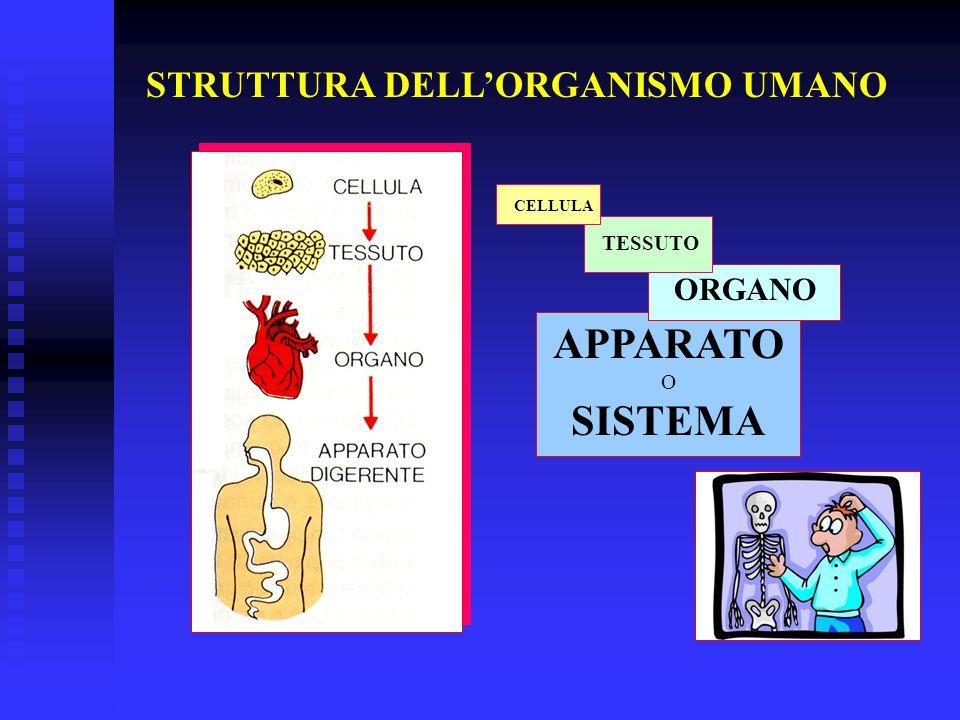 STRUTTURA DELLORGANISMO UMANO CELLULA TESSUTO ORGANO APPARATO O SISTEMA