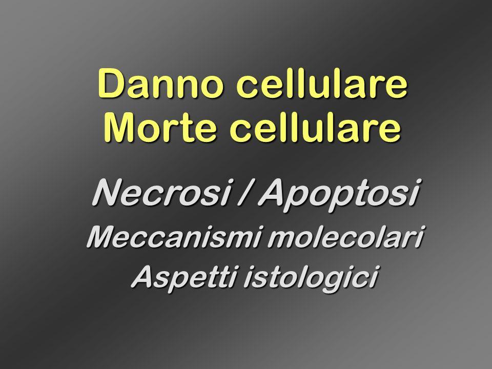 Danno cellulare Morte cellulare Necrosi / Apoptosi Meccanismi molecolari Aspetti istologici