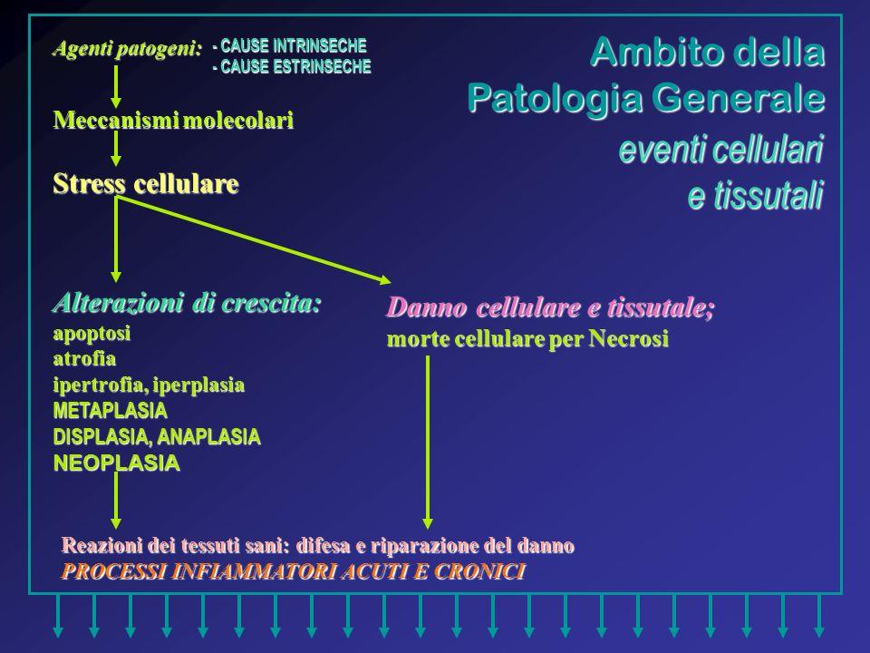 Reazioni dei tessuti sani: difesa e riparazione del danno PROCESSI INFIAMMATORI ACUTI E CRONICI Ambito della Patologia Generale Agenti patogeni: Mecca