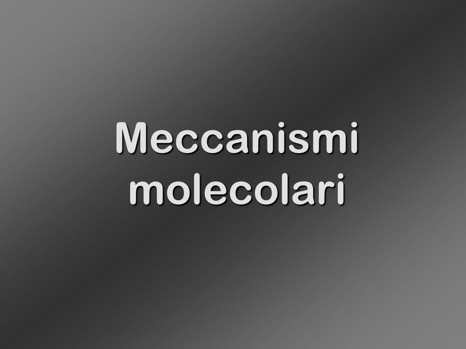 Meccanismimolecolari