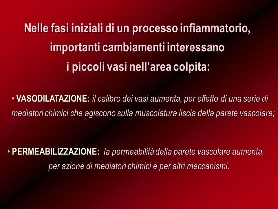 Nelle fasi iniziali di un processo infiammatorio, importanti cambiamenti interessano i piccoli vasi nellarea colpita: PERMEABILIZZAZIONE: la permeabil