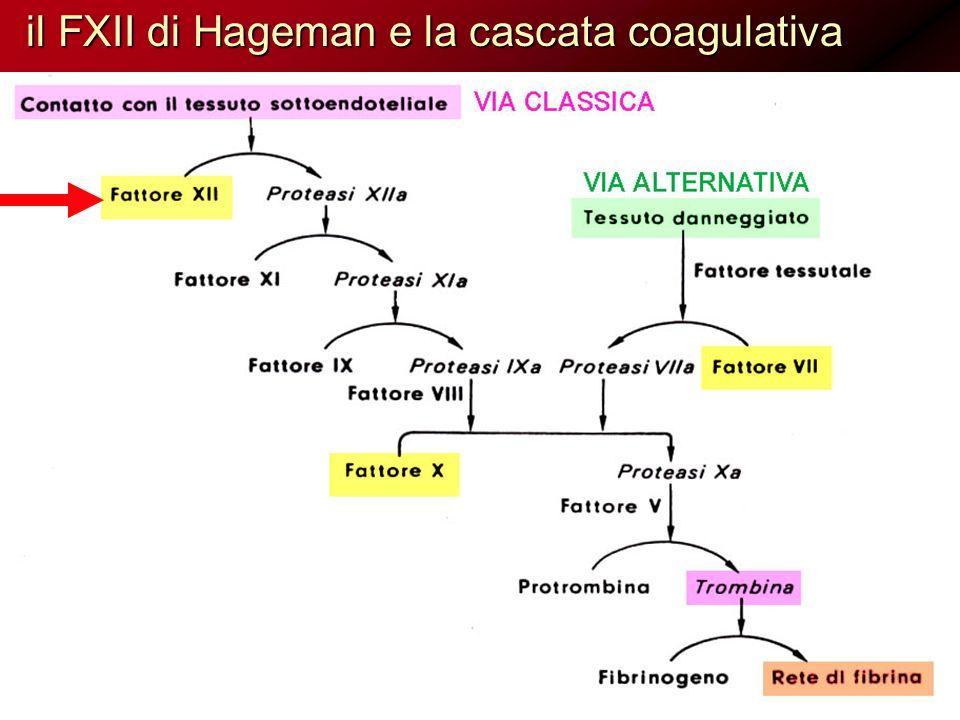 il FXII di Hageman e la cascata coagulativa