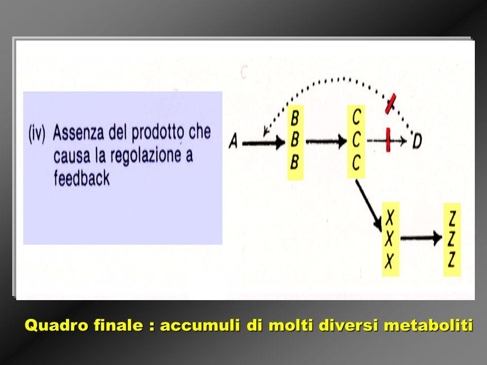 Quadro finale : accumuli di molti diversi metaboliti