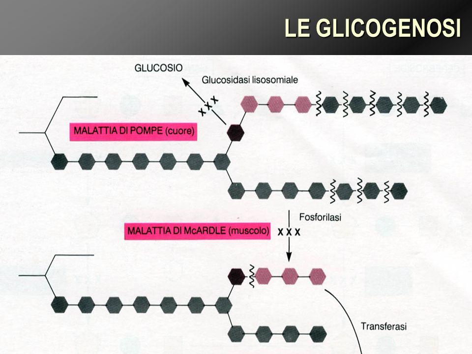 LE GLICOGENOSI