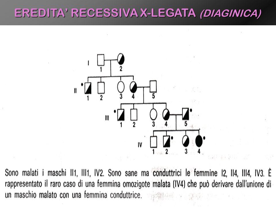 EREDITA RECESSIVA X-LEGATA (DIAGINICA)