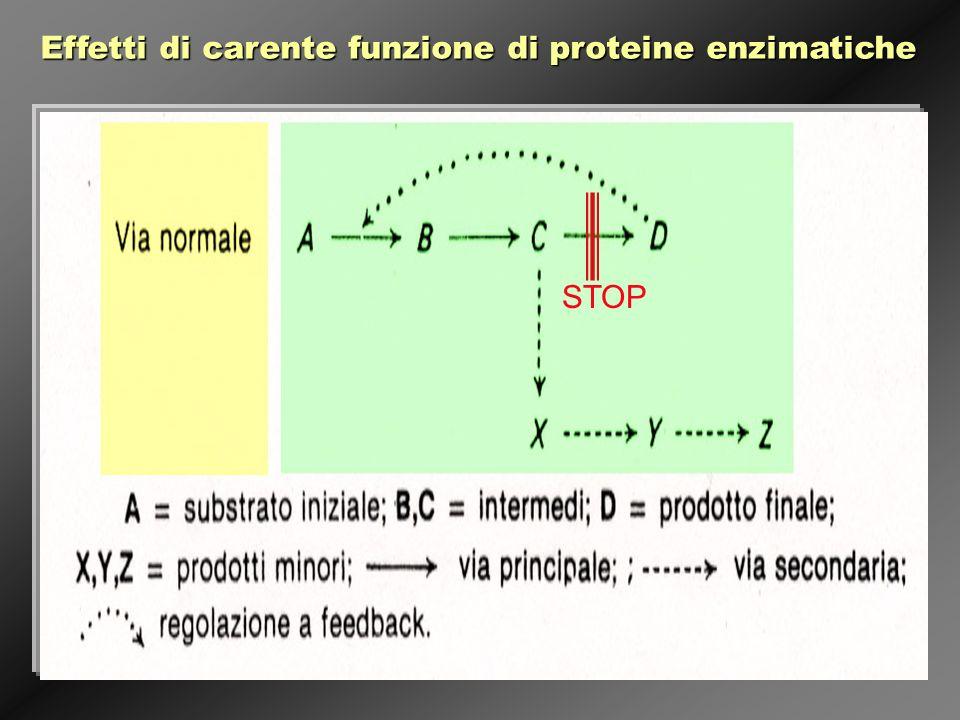 Effetti di carente funzione di proteine enzimatiche STOP