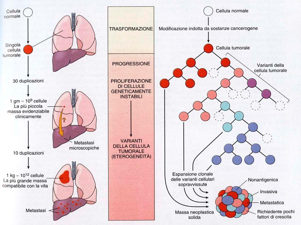 - un proto-oncogène mutato che comincia a funzionare male viene definito oncogène attivato; oncogène attivato; - la cellula in cui uno o più proto-onc