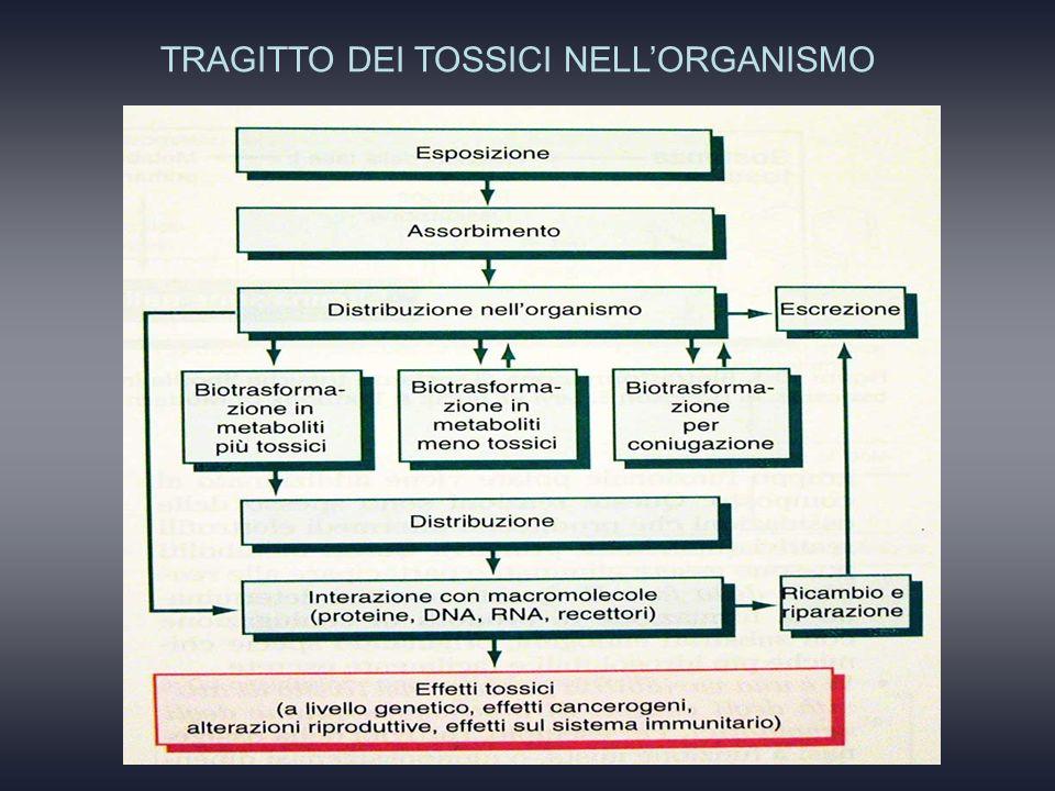 TRAGITTO DEI TOSSICI NELLORGANISMO