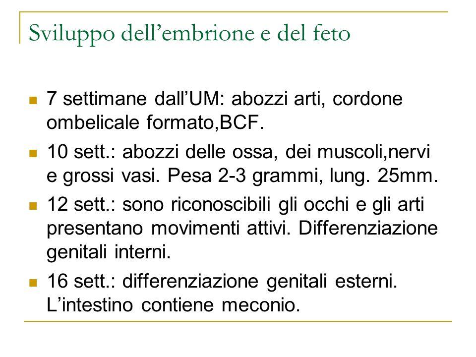 Sviluppo dellembrione e del feto 7 settimane dallUM: abozzi arti, cordone ombelicale formato,BCF. 10 sett.: abozzi delle ossa, dei muscoli,nervi e gro