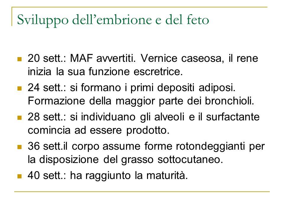Sviluppo dellembrione e del feto 20 sett.: MAF avvertiti. Vernice caseosa, il rene inizia la sua funzione escretrice. 24 sett.: si formano i primi dep