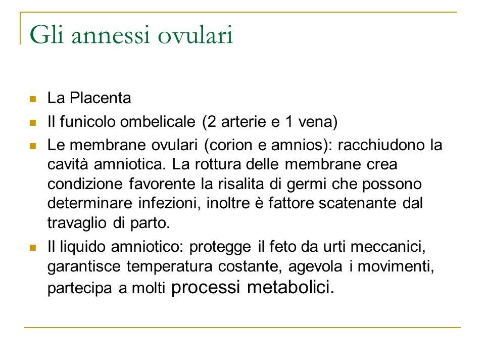 Gli annessi ovulari La Placenta Il funicolo ombelicale (2 arterie e 1 vena) Le membrane ovulari (corion e amnios): racchiudono la cavità amniotica. La