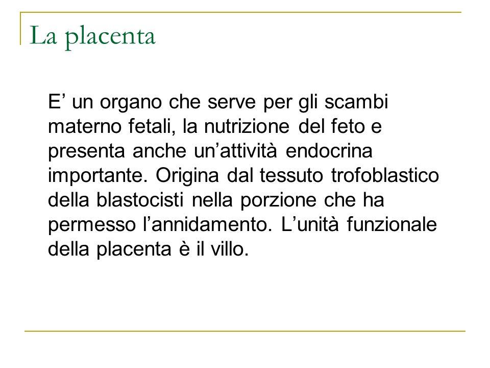 La placenta E un organo che serve per gli scambi materno fetali, la nutrizione del feto e presenta anche unattività endocrina importante. Origina dal