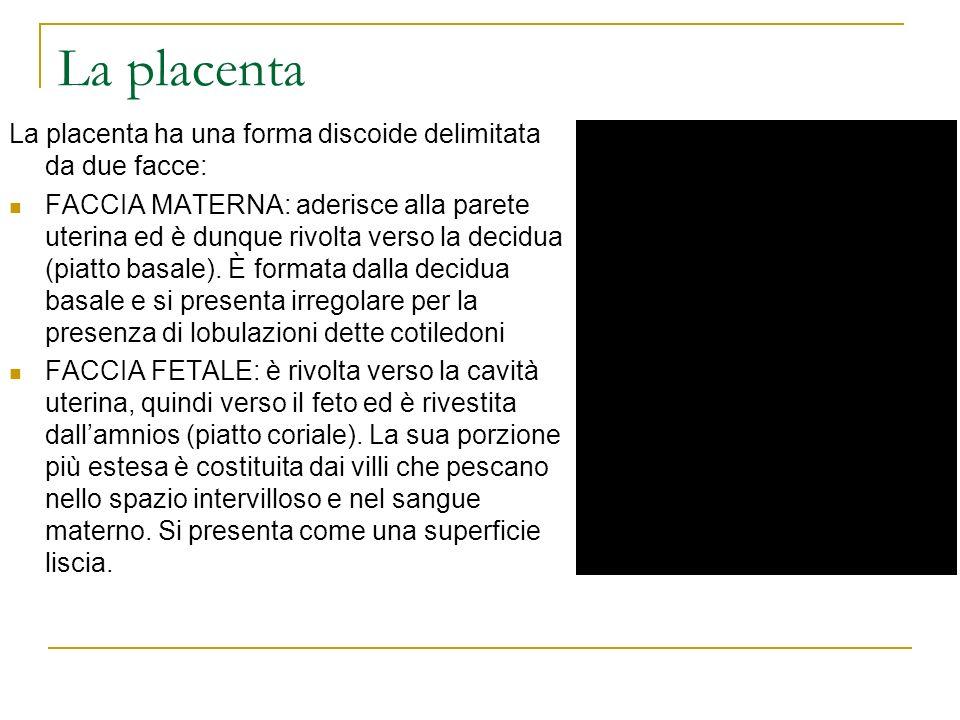 La placenta ha una forma discoide delimitata da due facce: FACCIA MATERNA: aderisce alla parete uterina ed è dunque rivolta verso la decidua (piatto b