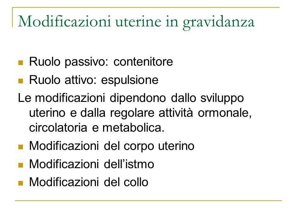 Modificazioni uterine in gravidanza Ruolo passivo: contenitore Ruolo attivo: espulsione Le modificazioni dipendono dallo sviluppo uterino e dalla rego