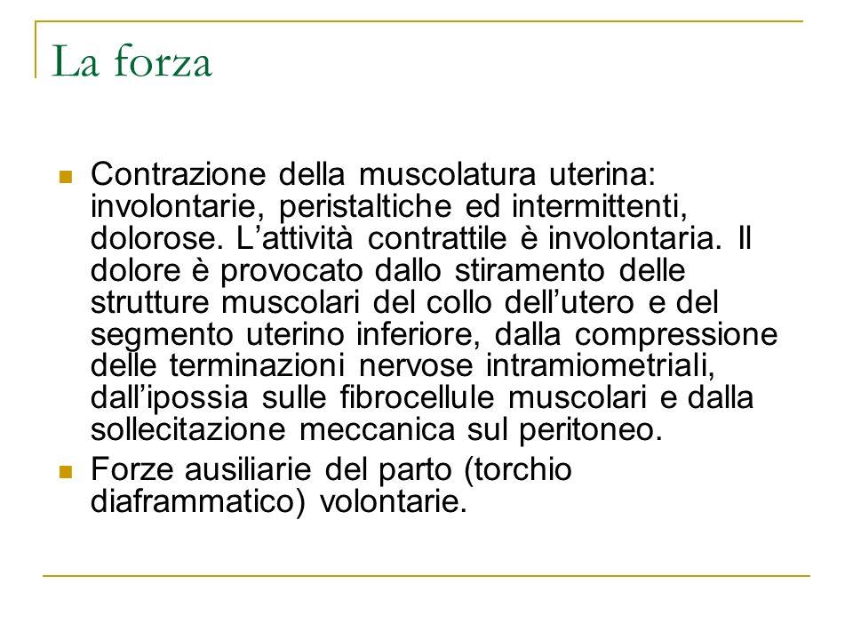 La forza Contrazione della muscolatura uterina: involontarie, peristaltiche ed intermittenti, dolorose. Lattività contrattile è involontaria. Il dolor