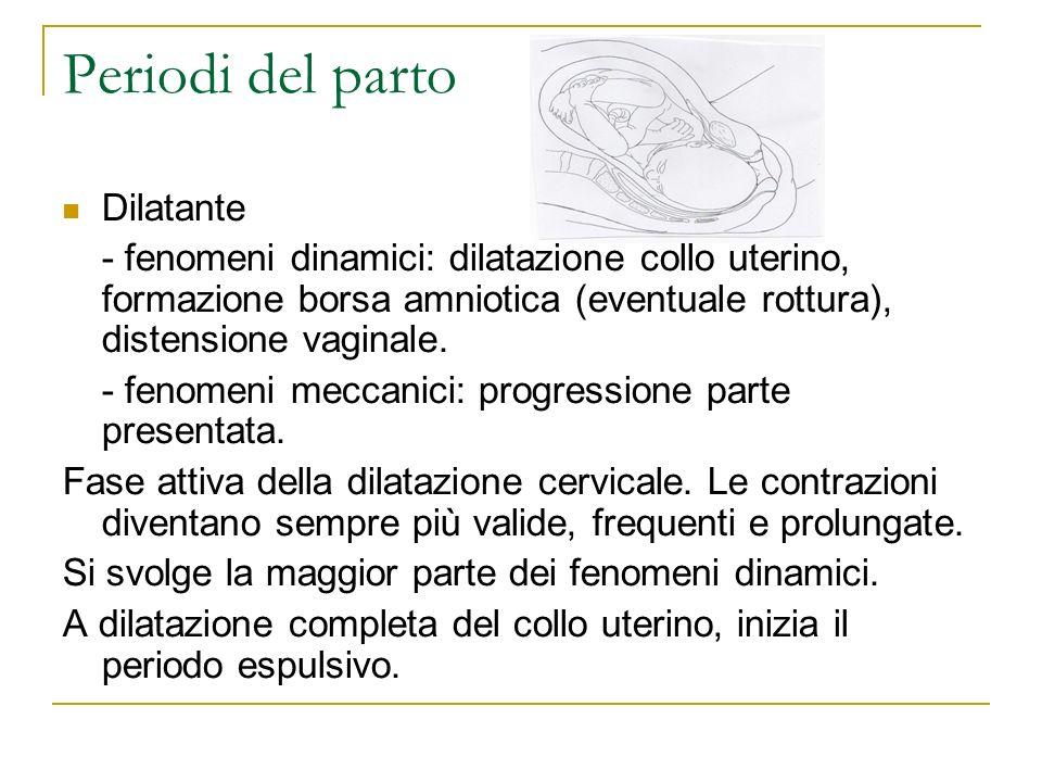 Periodi del parto Dilatante - fenomeni dinamici: dilatazione collo uterino, formazione borsa amniotica (eventuale rottura), distensione vaginale. - fe