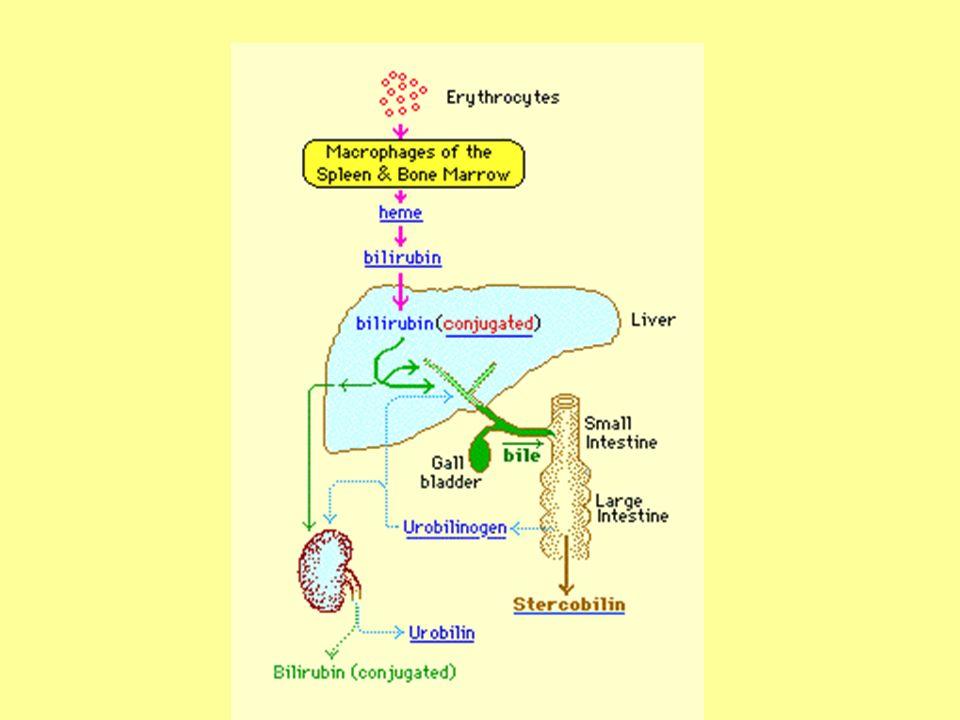Quando bil >2 mg/dl compare ittero tipo di itterocause e tipo di bil