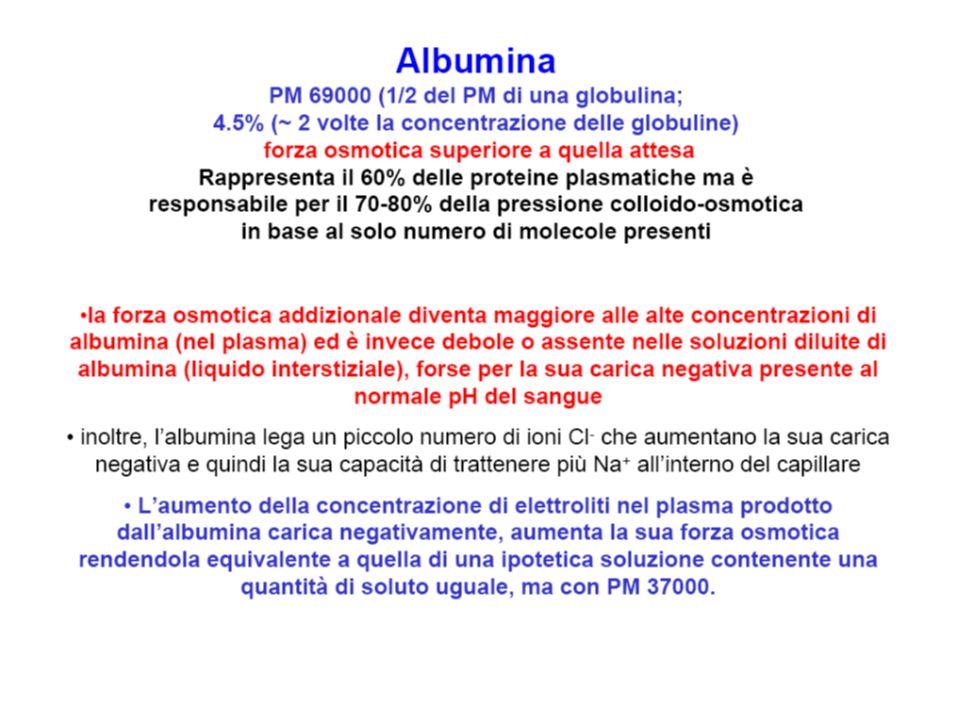 Sintesi di proteine epatiche 6-8 g/100 ml di plasma Albumina (ma emivita ca.
