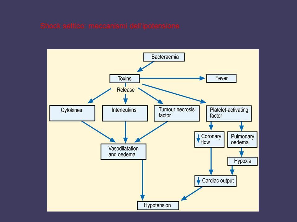 Shock settico: meccanismi dellipotensione