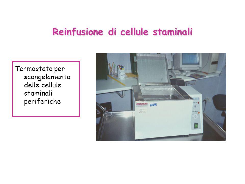 Reinfusione di cellule staminali Termostato per scongelamento delle cellule staminali periferiche