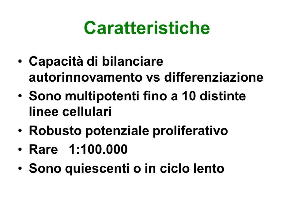 Caratteristiche Capacità di bilanciare autorinnovamento vs differenziazione Sono multipotenti fino a 10 distinte linee cellulari Robusto potenziale pr