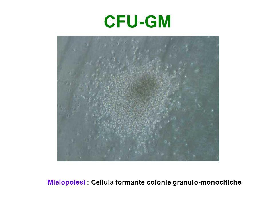 CFU-E Eritropoiesi: cellula che forma piccoli aggregati eritroidi, la BFU-E grandi colonie eritroidi